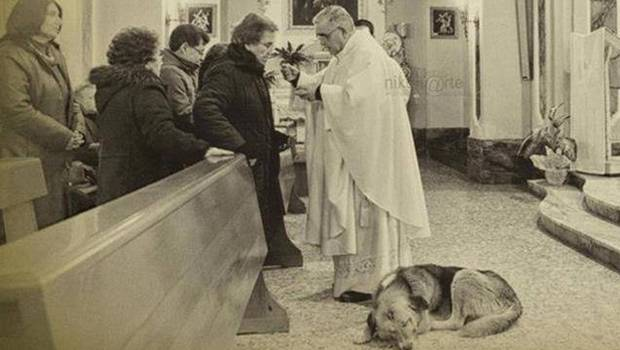 perro-ciccio-iglesia-italia