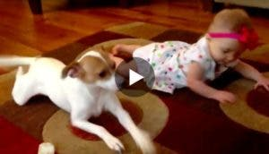 perro-ensena-bebe-gatear-play