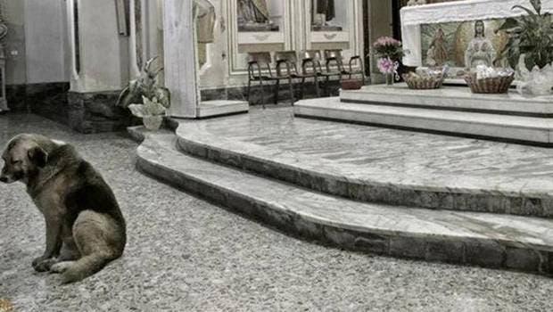 perro-espera-duena-muerta-en-iglesia