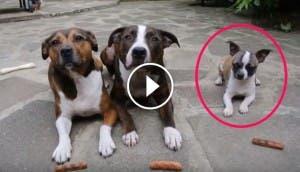 perro-nos-ensena-que-el-tamano-no-importa