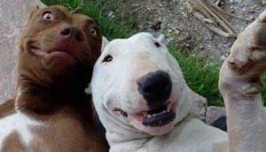 perros-selfie-