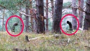 sorpresa-bosque