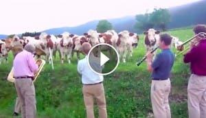 vacas-jazz-play