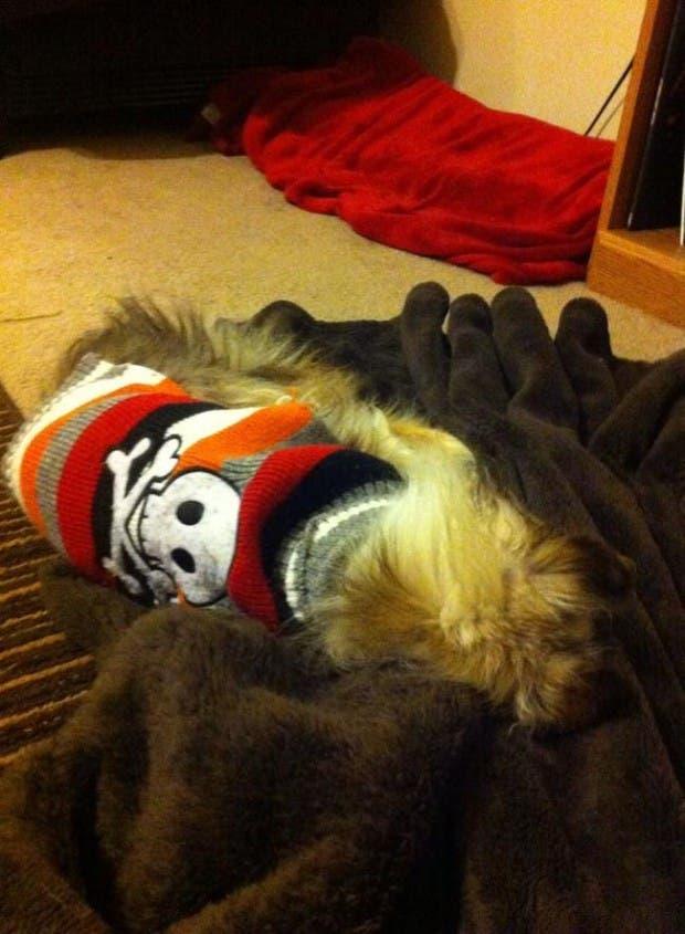 Toothless el perro13