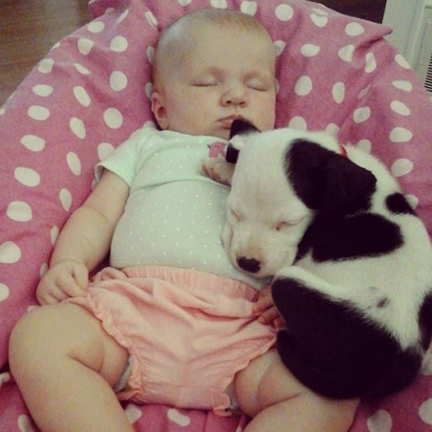 bebe-duerme-con-cachorro-pit-bull