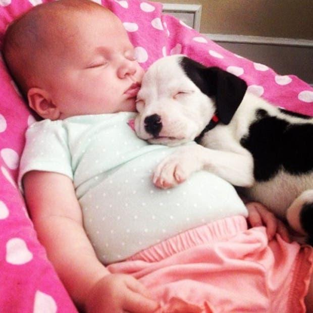 bebe-duerme-con-pit-bull