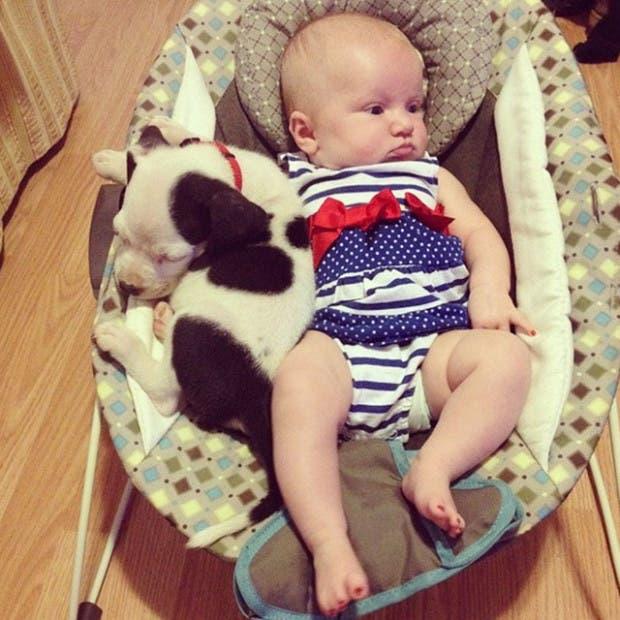 bebe-y-cachorro-pit-bull