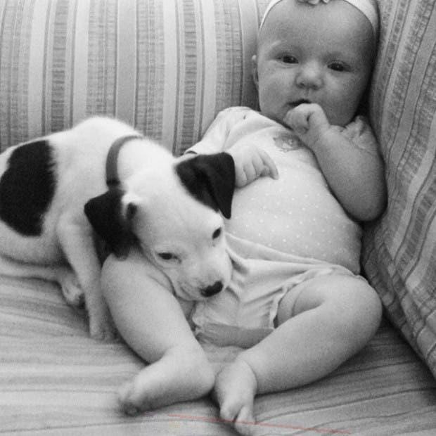 bebe-y-perro-pit-bull