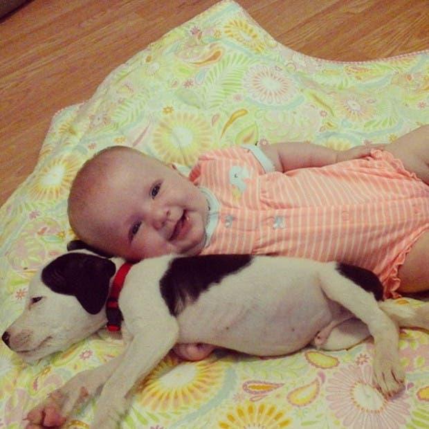 cachorro-pit-bull-crece-con-bebe
