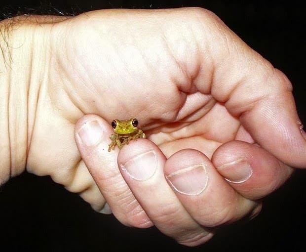 criaturas pequeñas10
