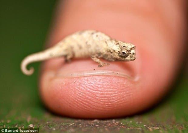 criaturas pequeñas2