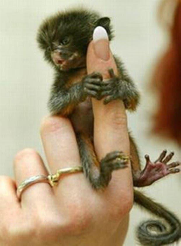 criaturas pequeñas21