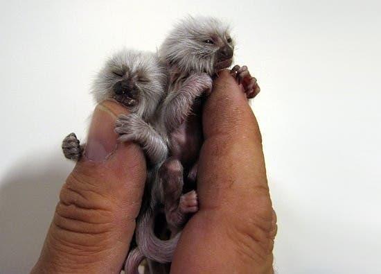 criaturas pequeñas22