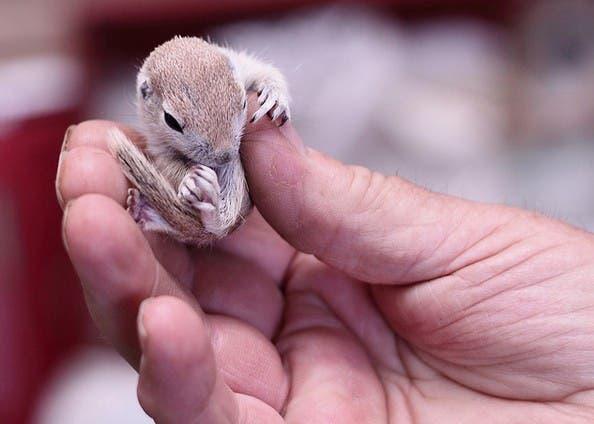 criaturas pequeñas25