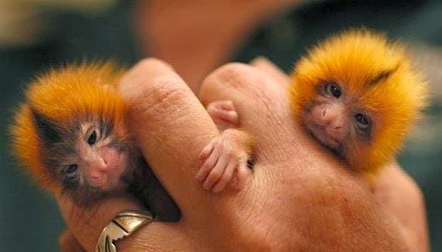 criaturas pequeñas7