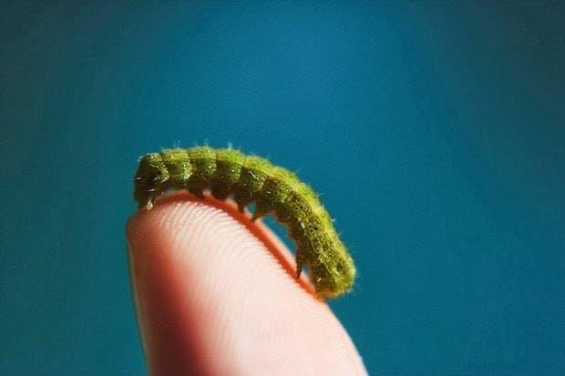 criaturas pequeñas9