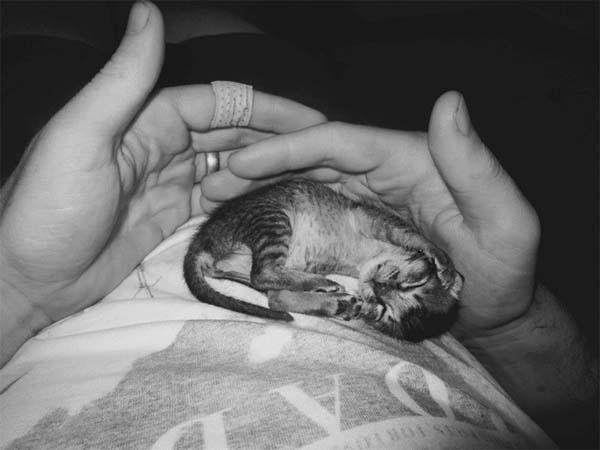 gatito miniatura10