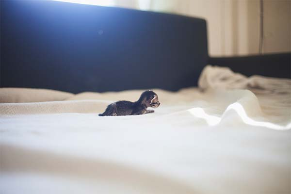gatito miniatura11