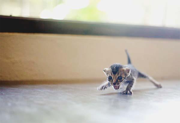 gatito miniatura12