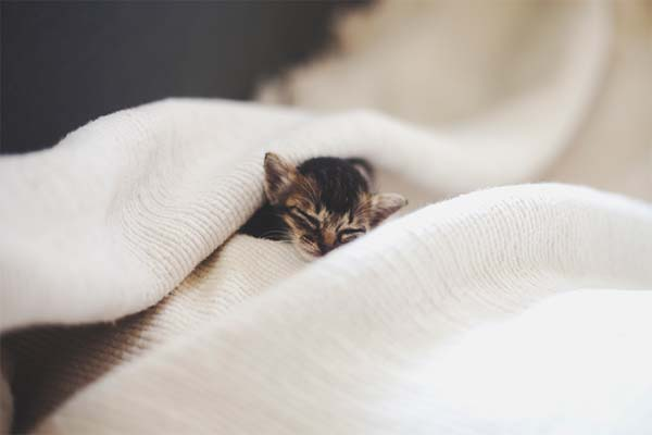 gatito miniatura13