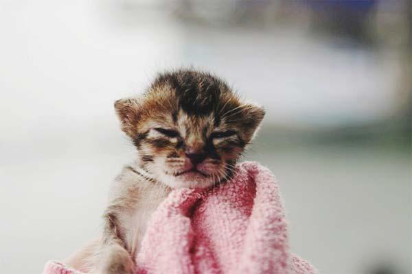 gatito miniatura4
