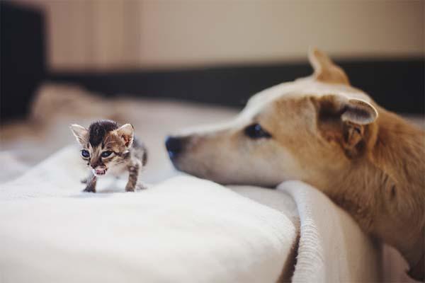 gatito miniatura6