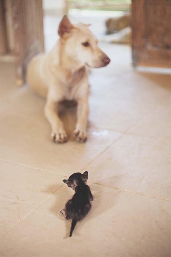 gatito miniatura7