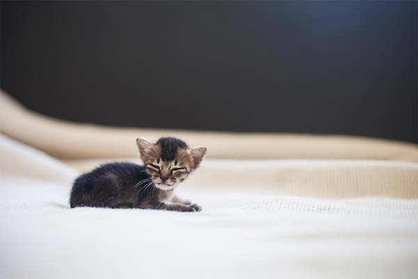 gatito miniatura9
