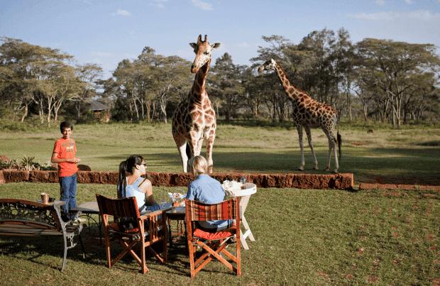 hotel de jirafas12