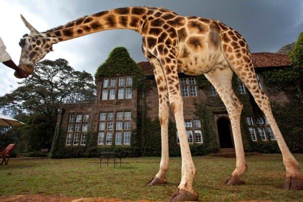 hotel de jirafas16