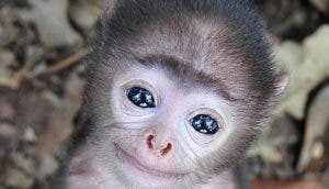 monos-tiernos-portada