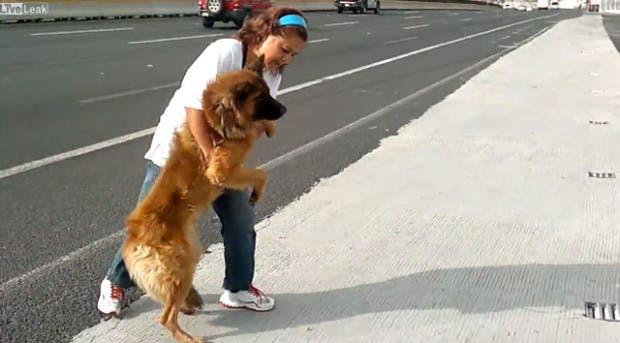 mujer-rescata-perro-herido-carretera-ciudad-de-mexico
