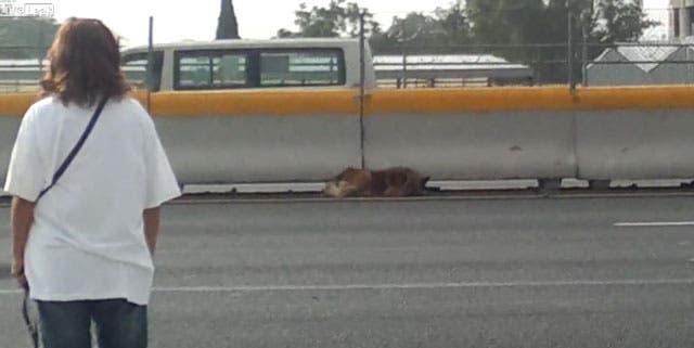 mujer-salva-perro-autopista-ciudad-de-mexico