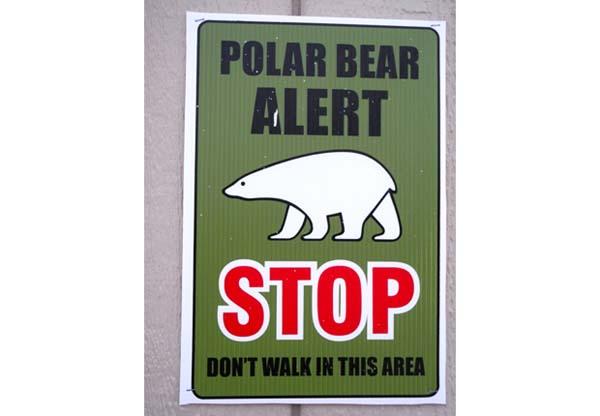 osos-polares2