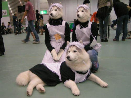 perros astutos11