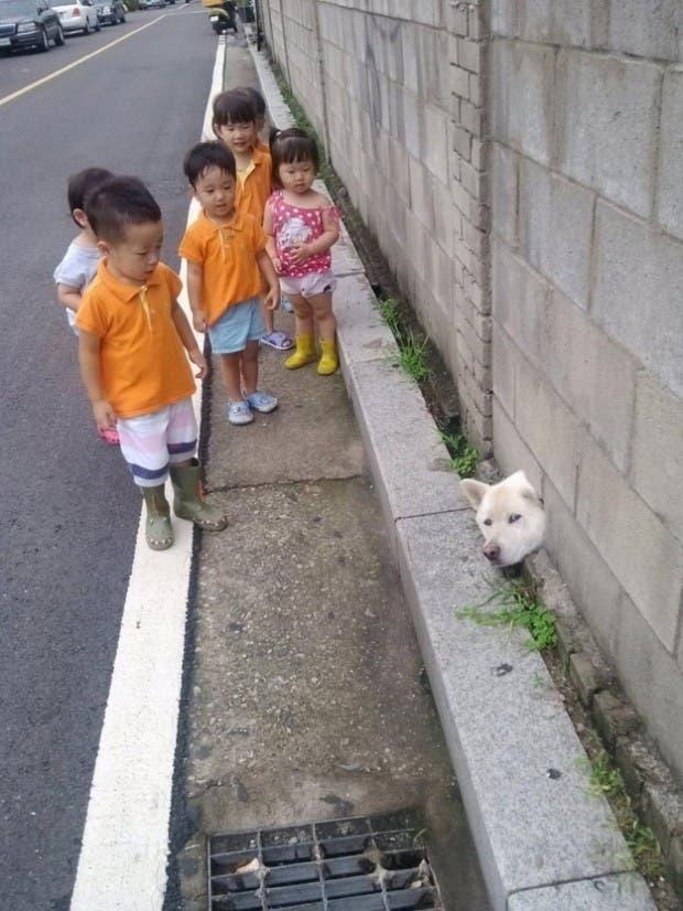 perros astutos12
