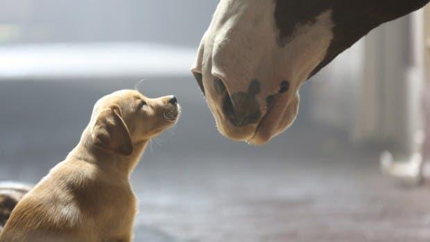 perros emociones18