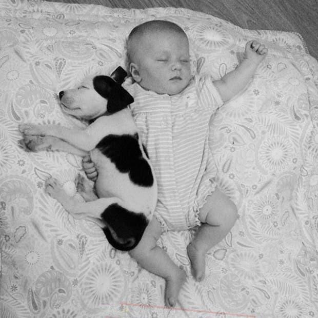 pit-bull-y-bebe-crecen-juntos