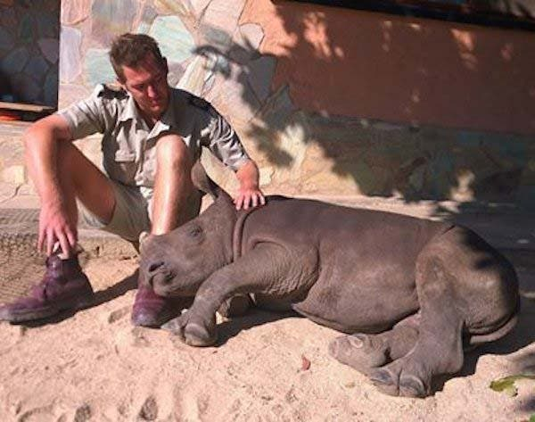 rinoceronte bebe7