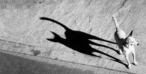 sombras14
