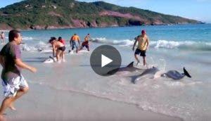 30delfines-playa-play