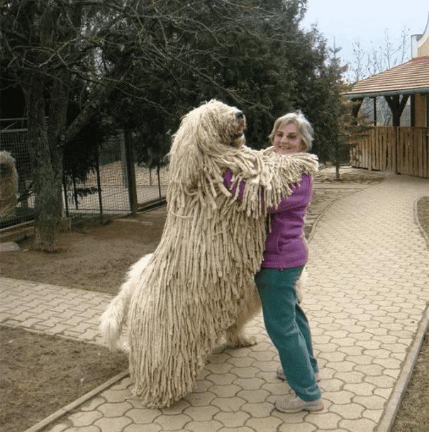 abrazo-perro10