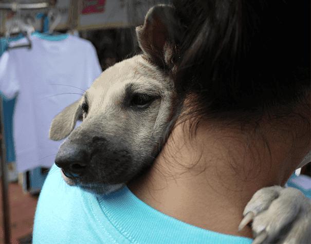 abrazo-perro17