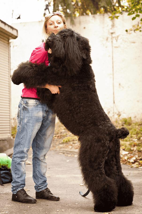 abrazo-perro22