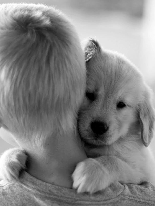 abrazo-perro23