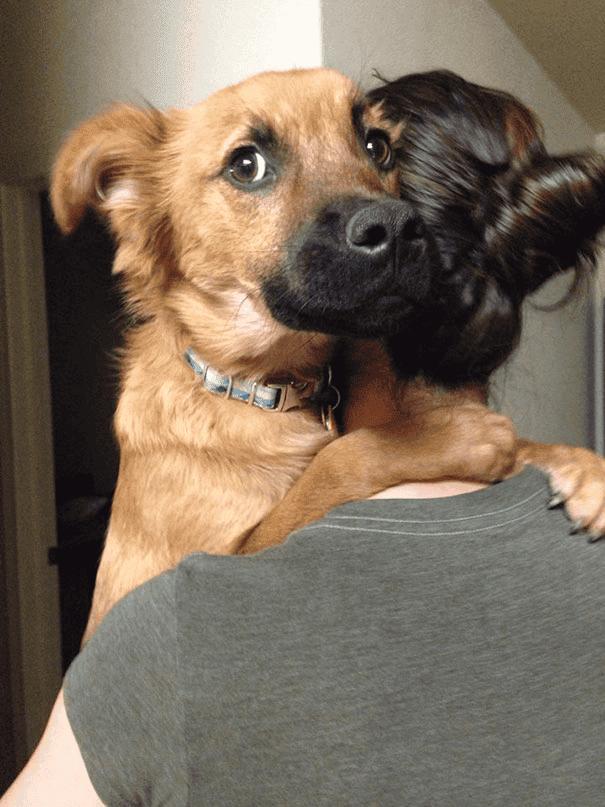 abrazo-perro8