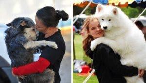 abrazo-perros-portada