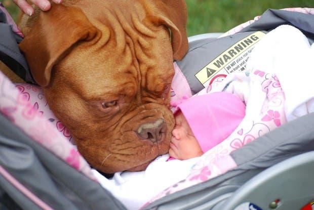 bebes y perros1