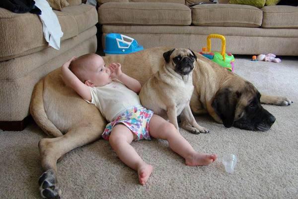bebes y perros11