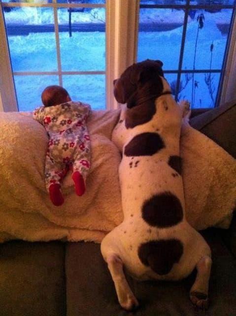 bebes y perros12